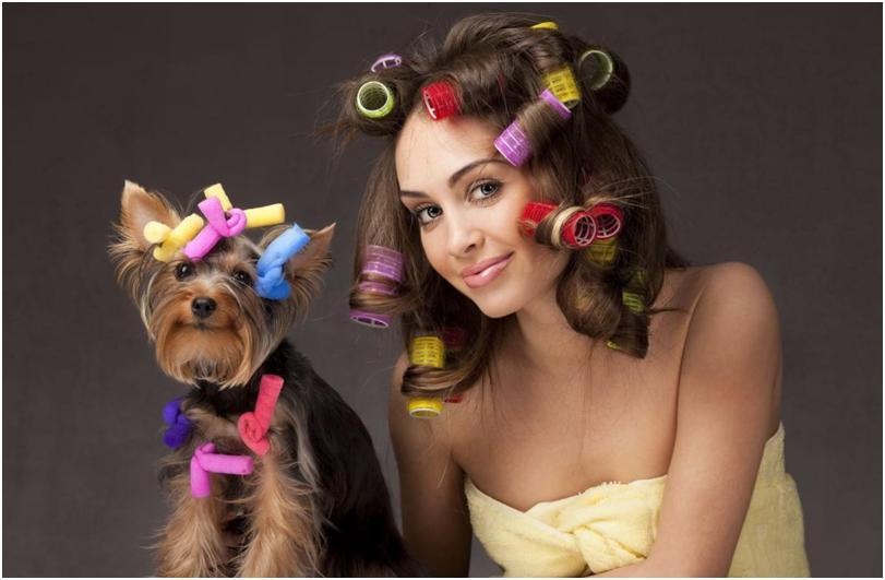 Девушка с бигудями и собакой